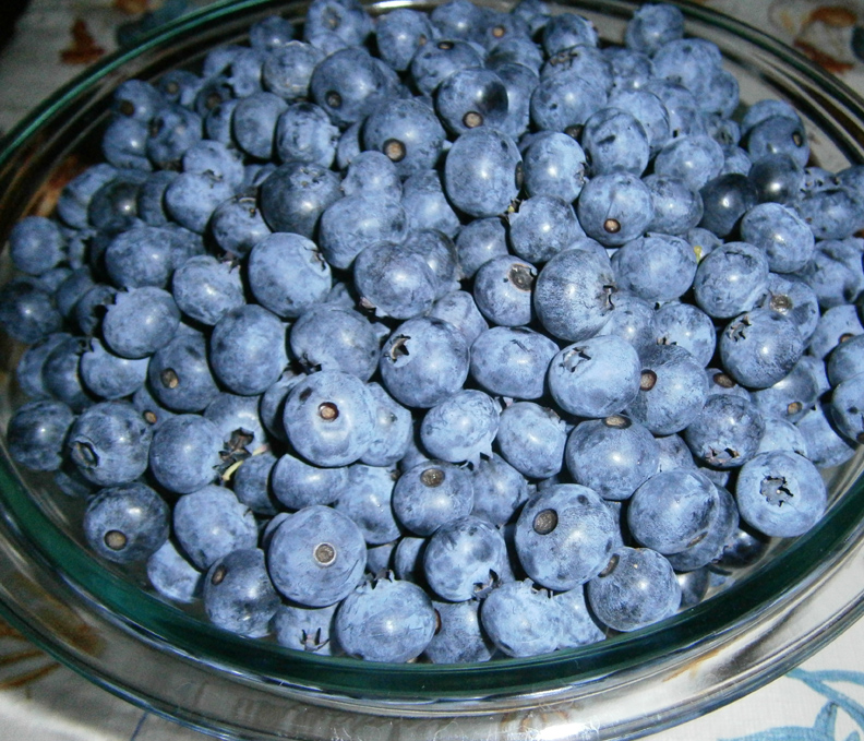 Blueberries we picked early in the day are so delicious in Blueberry Cake!