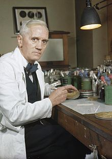 Sir Alexander Flemming- biologist, pharmacologist, and botanist- discovered Penicillin from the mould, Penicillium notatum.
